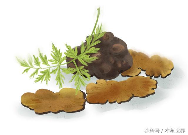 川芎的功效服用方法,川芎能治什么病?