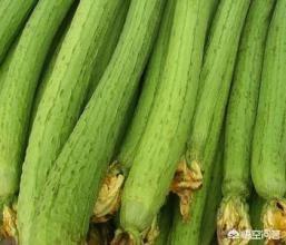 丝瓜根有什么功效和作用丝瓜蒌的功效与作用?