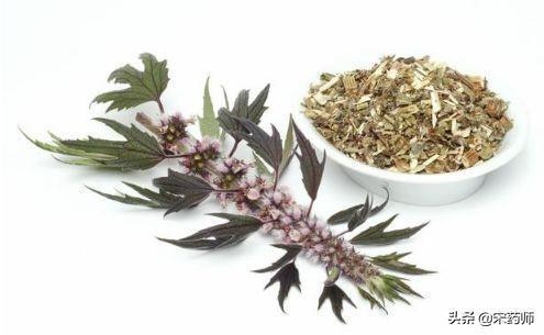 药草图片及名称,益母草是一种非常好的一种草药,你知道它对身体有哪些作用吗?