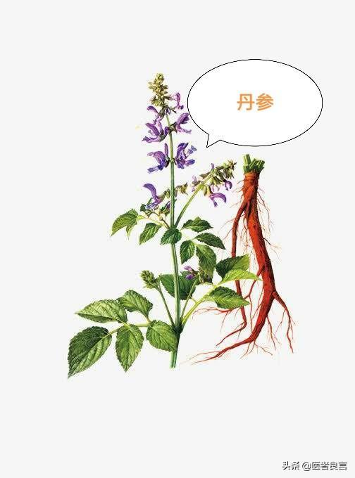 什么中草药是活血化瘀的中药赤芍的功效与作用及食用方法?
