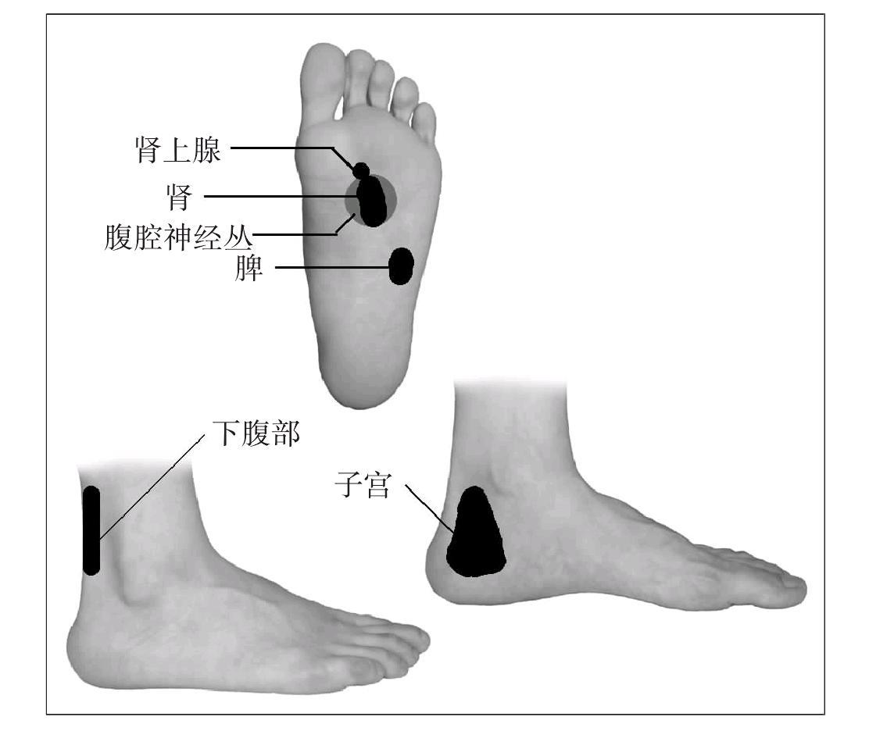 图解足部全息推拿法,脚底膀胱反射区怕凉