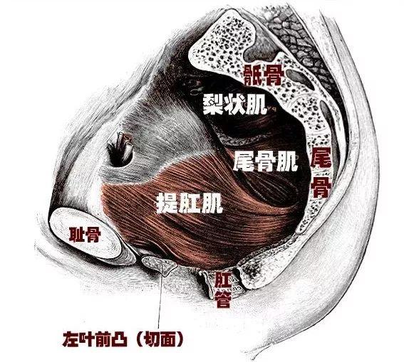 针灸治疗膀胱肌肉松弛,对膀胱好的穴位