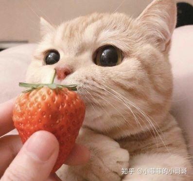 猫咪吃了异物有什么症状吗,猫吃异物多少天能排出