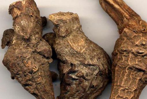 含有生川乌和生草乌膏药对肾影响,生草乌的功效与作用