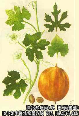 瓜蒌图片,女性吃瓜蒌子的功效与作用