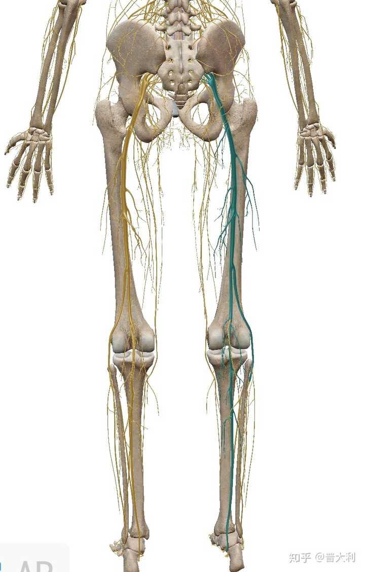 腰突腿疼针灸后能走走路吗,压迫神经腿疼无法走路