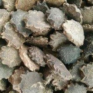 木鳖子膏药,木鳖果的功效与作用