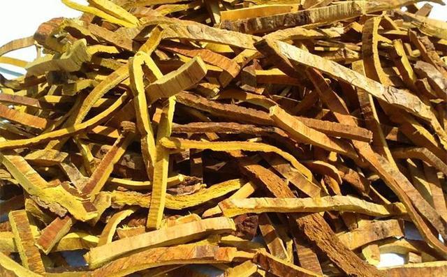 黄柏籽功效与作用,黄柏籽的功能主治
