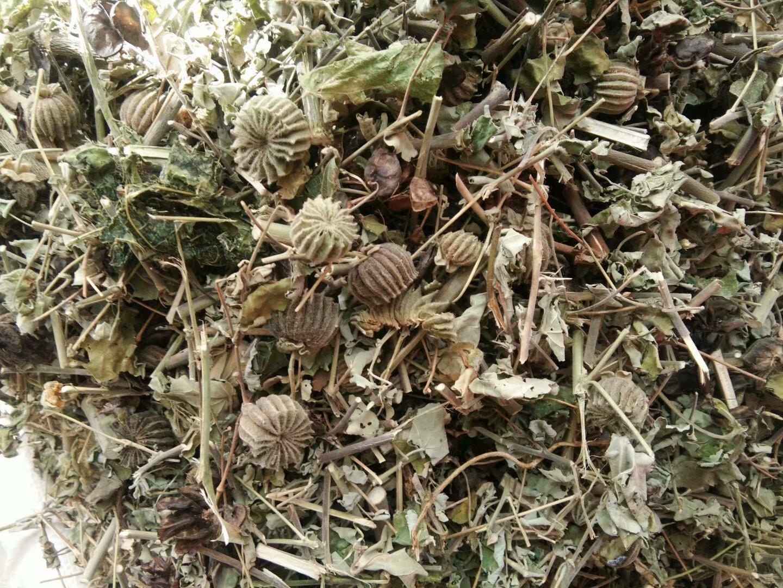 中药材老头草的功效,中药老头草学名叫什么