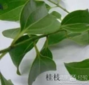 中药酒桂子的功效与作用,桂子暖香茶的功效与作用
